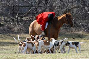 pic of hounds and horse